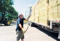 Le foin de commerce se vend entre 200 et 230$ la tonne, plus le transport. Crédit photo : Martin Ménard/TCN
