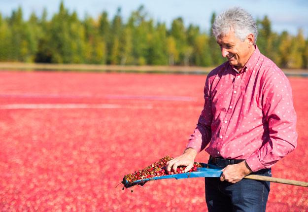 Cinquante pour cent des ventes de Martin Le Moine proviennent des canneberges biologiques. Crédit photo : Martin Ménard/Archive TCN