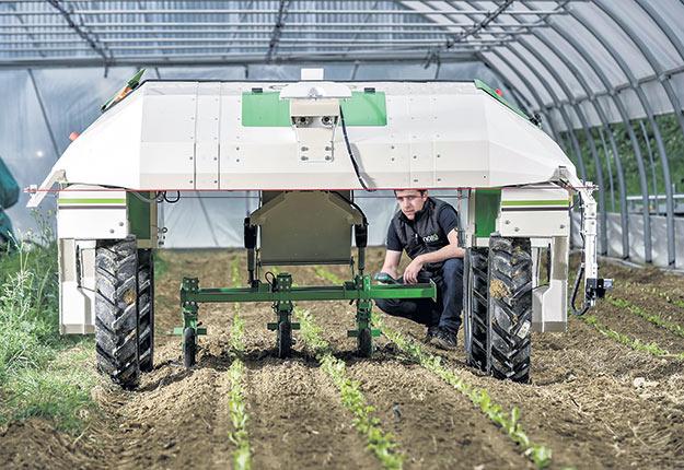 Le robot Dino, de la compagnie française Naïo Technologie, s'avère idéal pour désherber les salades. Crédit photo : Naïo