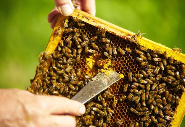 Le Canada est un joueur mineur dans la production de miel avec seulement 2,5 % de la production mondiale. Crédit photo : Archives/TCN