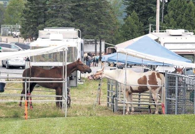 La dernière mort d'un cheval lors des Festivités Western de Saint-Victor a eu lieu il y a 40ans. Crédit photo : Gracieuseté des Festivités Western de Saint-Victor