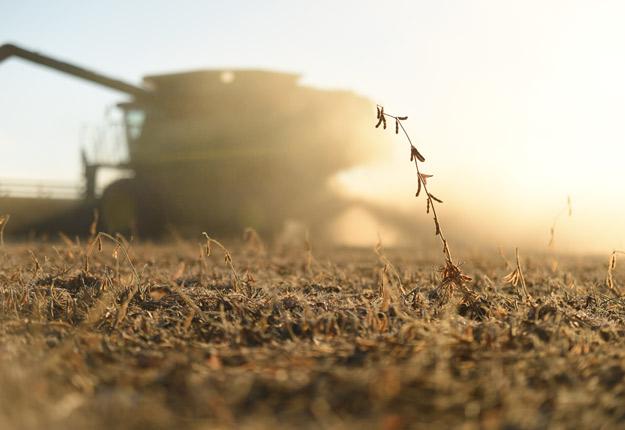 La guerre commerciale entre les États-Unis et la Chine a déjà des impacts négatifs sur le prix du soya. Crédit photo : Martin Ménard/Archives TCN