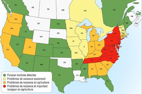 Les États-Unis suivent de près la progression de la punaise marbrée. Crédit photo : www.stopbmsb.org