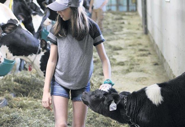 N'arrêtez pas de parler de l'agriculture à tout le monde parce que ça permettra à plusieurs de comprendre pourquoi on peut considérer une vache comme son animal préféré. Crédit photo : Agrimom