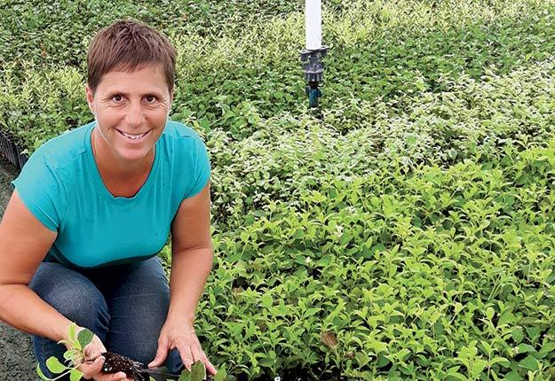 C'est en travaillant dans une pépinière que Francine Gaucher a découvert sa passion pour la multiplication des arbustes. Crédit photo : Gracieuseté Francine Gaucher