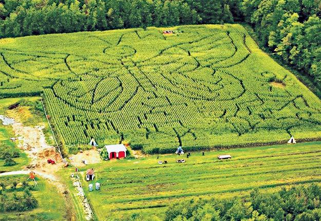 Le Verger Labonté multiplie les journées qui se déroulent sur un thème autour de son labyrinthe de maïs. Crédit photo: Gracieuseté Verger Labonté