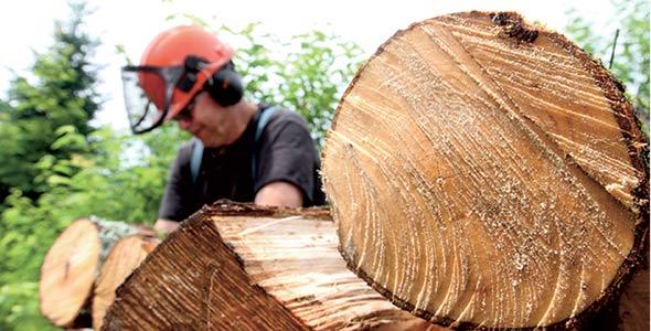 La production de bois de chauffage est complémentaire aux activités de récolte forestière usuelle (éclaircie commerciale, coupe de jardinage ou même coupe totale). Il y a toujours des parties de l'arbre (branches, partie ayant de la pourriture, tronc trop courbé) qui ne peuvent pas être vendues aux industries, et peuvent ainsi être récupérées en bois de chauffage.