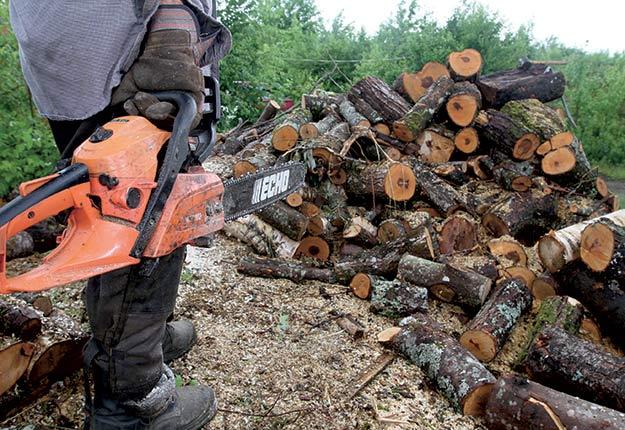Avant d'abattre un arbre, il est conseillé de bien réfléchir, car en foresterie, les erreurs coûtent cher et prennent du temps à corriger.