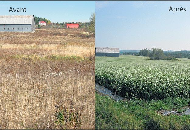 Les actions portent fruit pour remettre en culture les terres en friche, comme l'illustrent ces photos. Crédit photo : Photos : MRC Les Basques