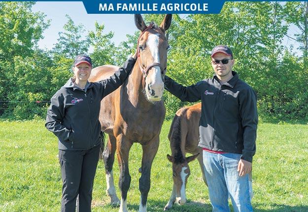 Sébastien Boutin et sa conjointe Sophie Moore se sont lancés dans l'élevage de Dutch Harness en 2014. Crédit photo : Gracieuseté de Jean-Philippe Carrier