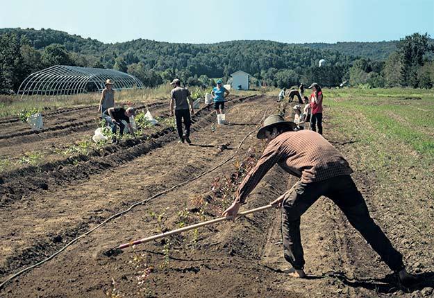 Un petit groupe des Compagnons Maraîcher.e.s a donné de son temps aux producteurs de La Récolte de la Rouge les 8 et 9septembre derniers. Crédit photo : Gracieuseté des Compagnons Maraîcher.e.s