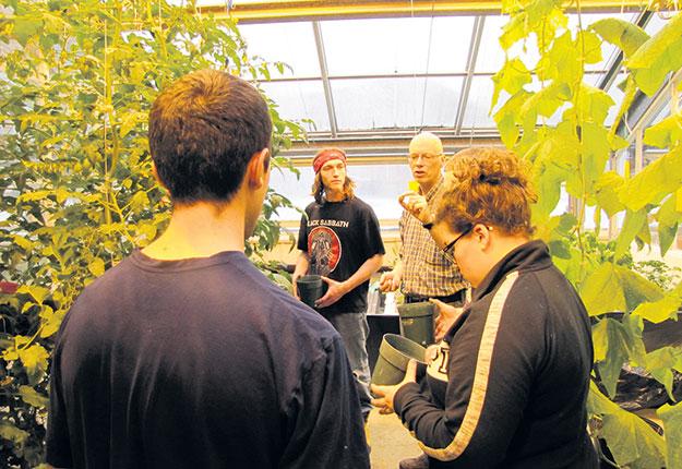 Des étudiants cultivent des tomates et des concombres de serre sous éclairage artificiel et sans pesticides. Photos : Caitlin MacDougall/Campus Macdonald