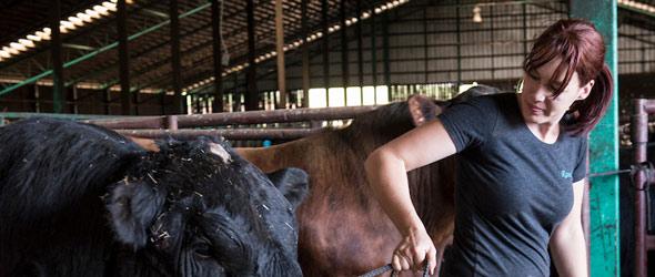 La productrice bovine Maude Tremblay conduit tous ses tracteurs, mais en confie la réparation à un employé mécanicien étant donné que la gestion, le bien-être animal et le suivi génétique la passionnent plus que la mécanique.