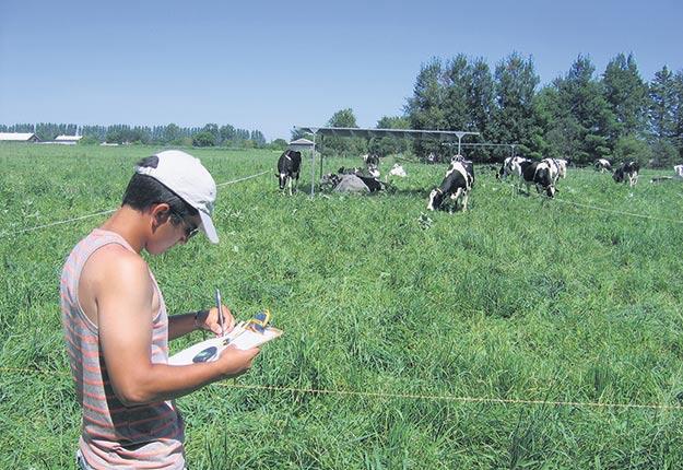 Santiago Palacio a étudié l'impact des ombrières sur les vaches laitières au cours de sa maîtrise. Il est présentement étudiant au doctorat dans le laboratoire d'Elsa Vasseur à l'Université McGill. Crédit photo : Elsa Vasseur