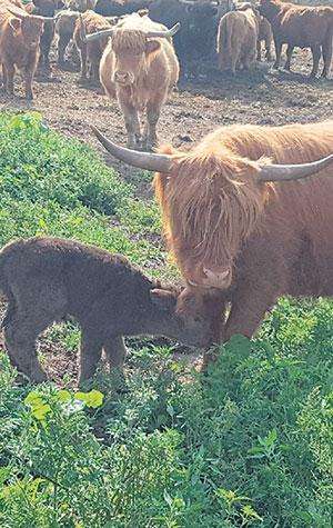 Robert Pierre tient à ce que ses animaux puissent vivre dans des conditions qui se rapprochent le plus de leur vie naturelle. Crédit photo : Gracieuseté des Museaux d'Écosse