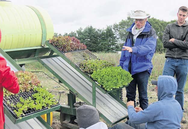 Au début de septembre, David Wees et ses étudiants du cours de culture maraîchère transplantent des cultivars de laitues et d'autres légumes au Centre de recherche horticole. Crédit photo : Caitlin MacDougall, Campus Macdonald