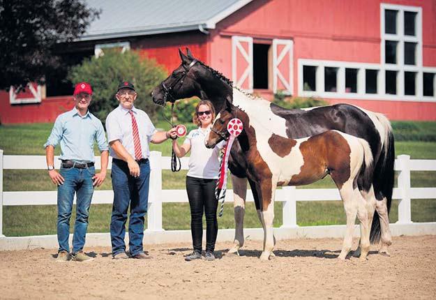 Une pouliche de l'éleveuse Gabrièle Roy a retenu l'attention de deux juges allemands lors de la récente inspection annuelle des chevaux Westphalien Warmblood. Crédit photo : Gracieuseté de Gabrièle Roy