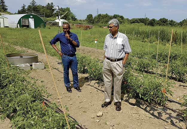 Chandra Madramootoo et son étudiant au doctorat Samuel Ihuoma observent un système d'irrigation goutte à goutte dans un champ de tomates.