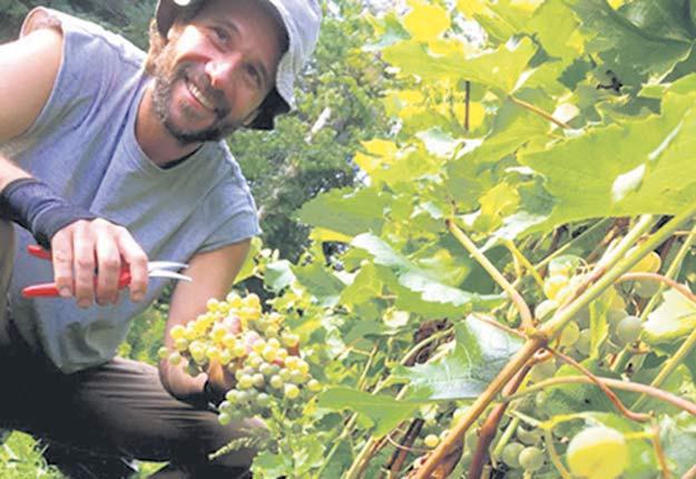 Stéphane Lamarre, du vignoble Château de cartes, entend doubler le nombre de pieds de vigne de sa production, notamment avec du pinot noir et du chardonnay. Crédit photo : Gracieuseté du Château de cartes
