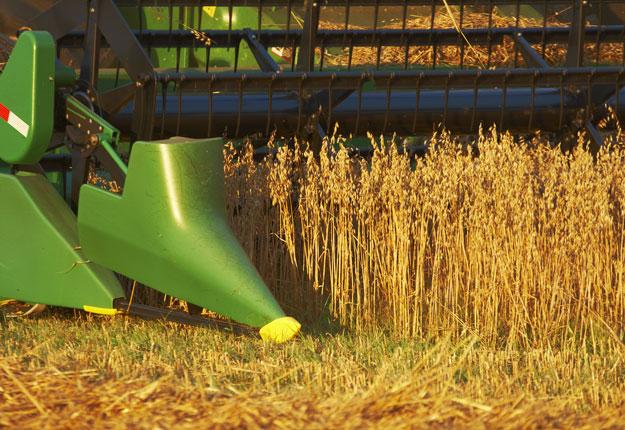 Tous les types de grains permettent de générer des marges supérieures sous régie biologique d'après une étude qui sera publiée prochainement. Crédit photo : Archives/TCN