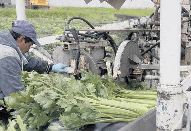 Les producteurs maraîchers espèrent combler le retard qu'ils accusent sur leurs concurrents ontariens et américains. Crédit photo : Archives/TCN