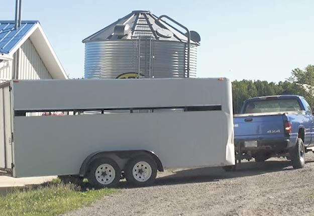 Le transport des agneaux est fait quand ils sont à jeun. Crédit photo : Gracieuseté de Léda Villeneuve