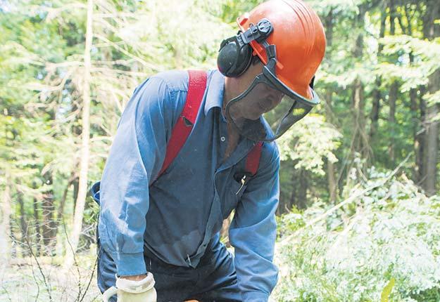 Les propriétaires de forêts privées ne ressentent pas encore vraiment les impacts de la chute du prix du bois d'œuvre sur les marchés. Crédit photo : Martin Ménard/Archives TCN