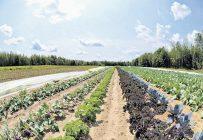 Le CETAB+ a pour mission de développer l'agriculture biologique et de contribuer à la prospérité des entreprises du secteur. Il favorise les systèmes agroalimentaires de proximité bénéfiques pour les exploitations et la société.