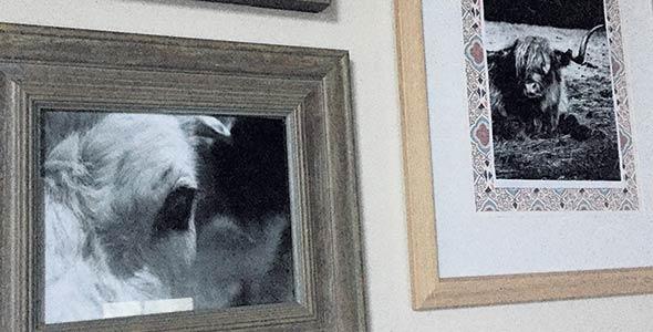 Sa décoration à la maison révèle un amour profond pour les vaches. Crédit photo : Gracieuseté de Sonia Vachon