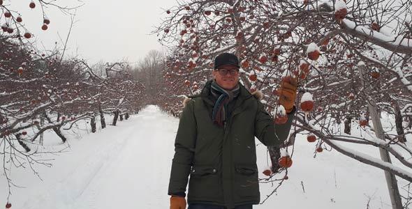 Hugo Poliquin, de la Cidrerie Cryo, constate que la plus petite taille des pommes leur a permis de rester attachées à l'arbre en plus grand nombre cet hiver. Crédit photo : Gracieuseté de la Cidrerie Cryo