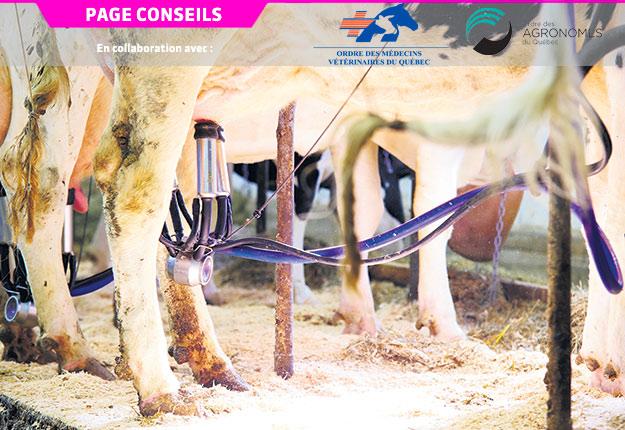 Selon une étude réalisée sur 846vaches multipares, il est possible de réduire la demande énergétique en récoltant moins de lait. Crédit photo : Martin Ménard/Archives TCN