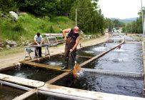 Un aquaculteur à l'œuvre dans les bassins de la Pisciculture Mont-Tremblant. Crédit photo : Marc Lajoie/Ministère québécois de l'Agriculture