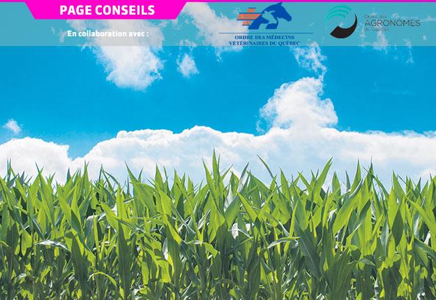 Depuis de nombreuses années, la résistance aux pesticides est au cœur des préoccupations des experts québécois en phytoprotection. Crédit photo : Pixabay