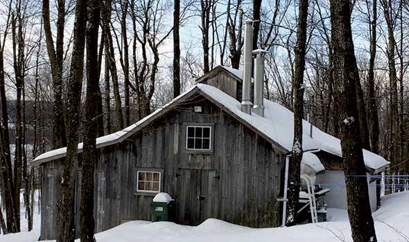 À moins d'être également évaluateur agréé, un ingénieur forestier pourra évaluer le potentiel acéricole d'une érablière, mais pas les équipements et la cabane. Crédit photo : Bernard Lepage