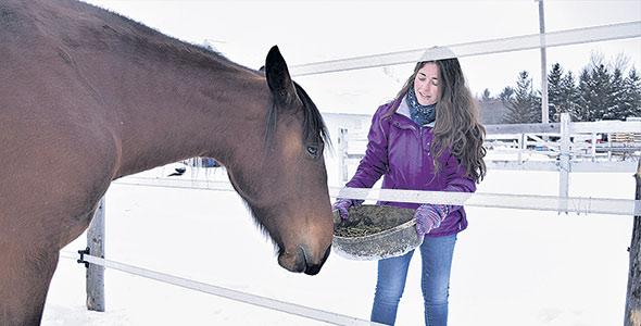 Vanessa Breton, qu'on aperçoit avec la jument Ostara, traite ses chevaux aux petits oignons: journées au grand air, moulée biologique et friandises faites maison sont au menu.