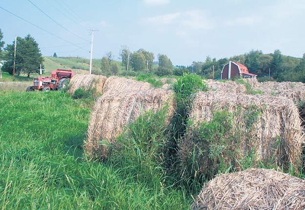 À la ferme, l'indemnisation reçue par le producteur ne serait pas représentative de la réalité, clame l'Union des producteurs agricoles. Crédit photo : Archives/TCN
