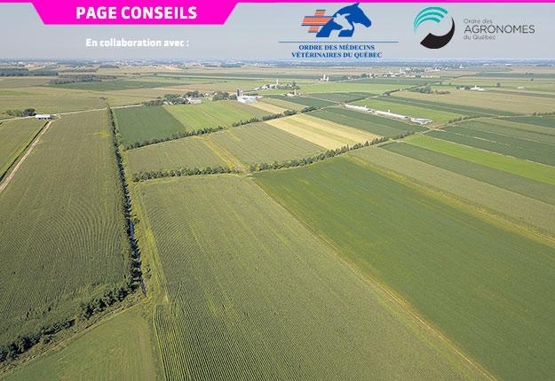 La haie brise-vent est un système agroforestier implanté dans les parcelles agricoles qui vise à protéger les sols, les cultures ou les infrastructures agricoles. Crédit photo : CRAAQ