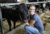 Mélanie Gagné et la Fédération de producteurs des races patrimoniales du Québec (FPRPQ) sont à pied d'œuvre pour sauver la centaine de vaches de race pure Canadiennes. Crédit photo : Emilie Nadeau, MAPAQ