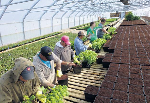 L'adoption de la culture hors terre a fait ses preuves en Europe et pourrait permettre aux producteurs de petits fruits du Québec d'augmenter leur productivité. Crédit : Ferme Onésime Pouliot