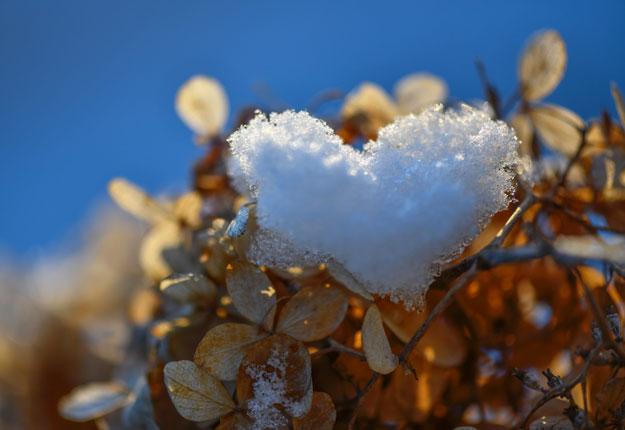 Les nombreuses précipitations de neige permettent aux photographes de capter des scènes uniques. Photo : Serge Labrosse