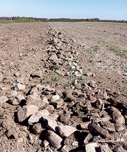 Les pierres des champs semblent repousser chaque année. Heureusement, les solutions pour mieux les gérer se modernisent. Crédit photo : Gracieuseté de Fourche Cyr