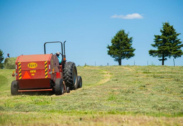 En moyenne, les producteurs recevront 38 $ la tonne de plus pour le foin qu'ils n'ont pu récolter. Crédit : Archives/TCN