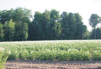 Les Producteurs de pommes de terre du Québec souhaitent être mieux informés sur la façon de faire autoriser leurs nouveaux sites de prélèvement en eau. Crédit photo : Archives TCN