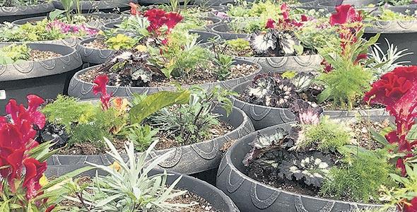 La spécialité des Lacroix: les fleurs annuelles.