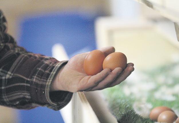 La demande canadienne pour les œufs de consommation a crû de près de 50% entre 2005 et 2017. Crédit photo : Archives TCN