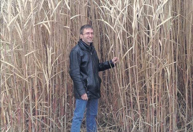 Philippe Séguin, professeur au Département des sciences végétales, aux abords d'un champ de miscanthus, une graminée cultivée pour la biomasse ou la litière. Crédit photo : Université McGill