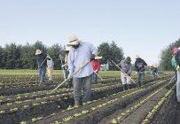 Établir de meilleures communications entre employeurs et travailleurs étrangers temporaires fait partie des objectifs du groupe. Crédit photo : Archives / TCN