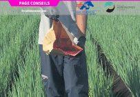 La production des mouches stériles s'échelonne de la fin du mois d'octobre au début de février. Les lâchers au champ ont lieu chaque semaine, de mai jusqu'à l'automne.