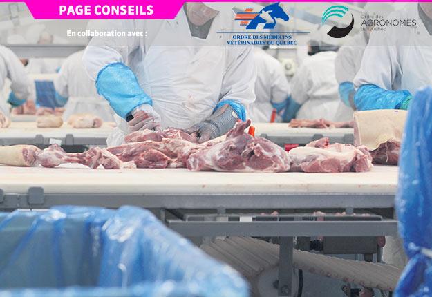Un ambitieux programme de recherche est mené dans quatre usines d'abattage et de découpe du porc au Québec. Crédit photo : Archives/TCN