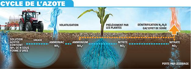 Le cycle de l'azote dans l'utilisation de l'urée au démarreur. Crédit photo : Gracieuseté du réseau Agrocentre